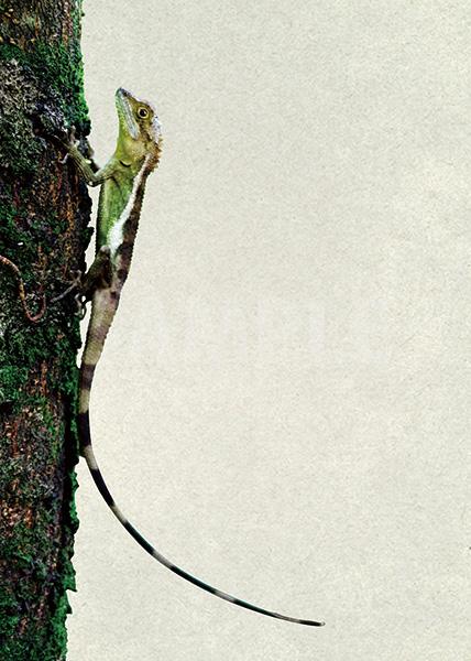 木につかまるトカゲのA4サイズ背景素材
