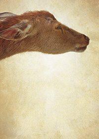 優しい目をした鹿の顔が配置されたA4サイズ背景素材