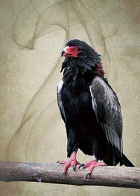 木につかまる鷹のA4サイズ背景素材
