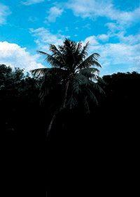 ヤシの木と青い空のA4サイズ背景素材