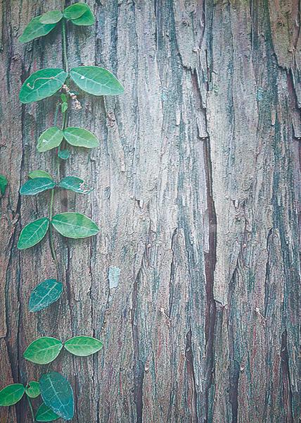 樹の幹を這う蔦のA4サイズ背景素材
