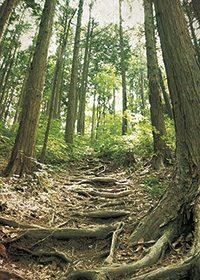 林道のA4サイズ背景素材