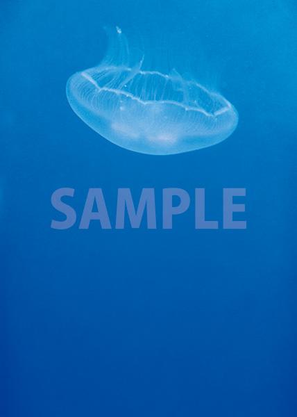 クラゲが浮かぶA4サイズ背景素材