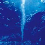 水槽内を泳ぐ魚のA4サイズ背景素材