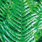 シダ系の葉っぱのA4サイズ背景素材