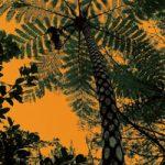 南国の樹木を見上げたA4サイズ背景素材