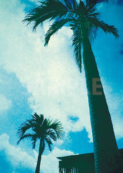 青い空に向かうヤシの木のA4サイズ背景素材