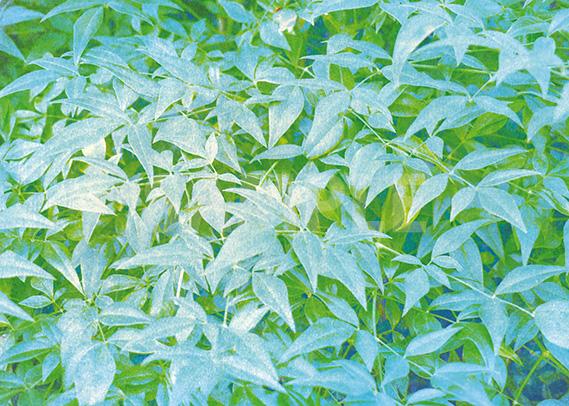 細長い葉っぱっが一面に広がるA4サイズ背景素材