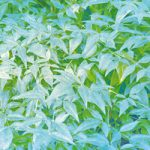 葉っぱが一面に広がるA4サイズ背景素材