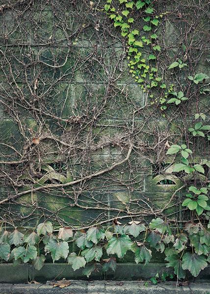 ブロック塀に絡みつく草のA4サイズ背景素材