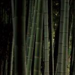 竹やぶのA4サイズ背景素材