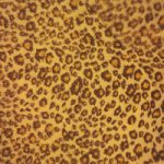 レオパード(ヒョウ柄)の布のA4サイズ背景素材