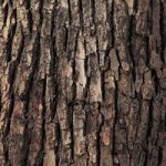 ゴツゴツした樹木の表面のA4サイズ背景素材