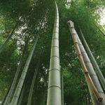 竹が伸びるA4サイズ背景素材
