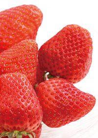 苺のA4サイズ背景素材