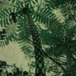 南国の木のA4サイズ背景素材