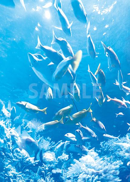 海の中の魚の群生のA4サイズ背景素材