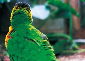 カラフルな鳥の後ろ姿のA4サイズ背景素材