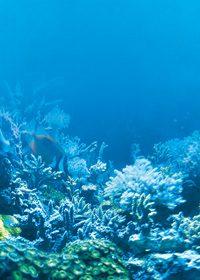 海の中の珊瑚のA4サイズ背景素材