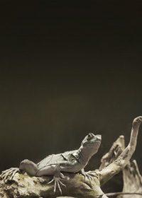 爬虫類・トカゲのA4サイズ背景素材